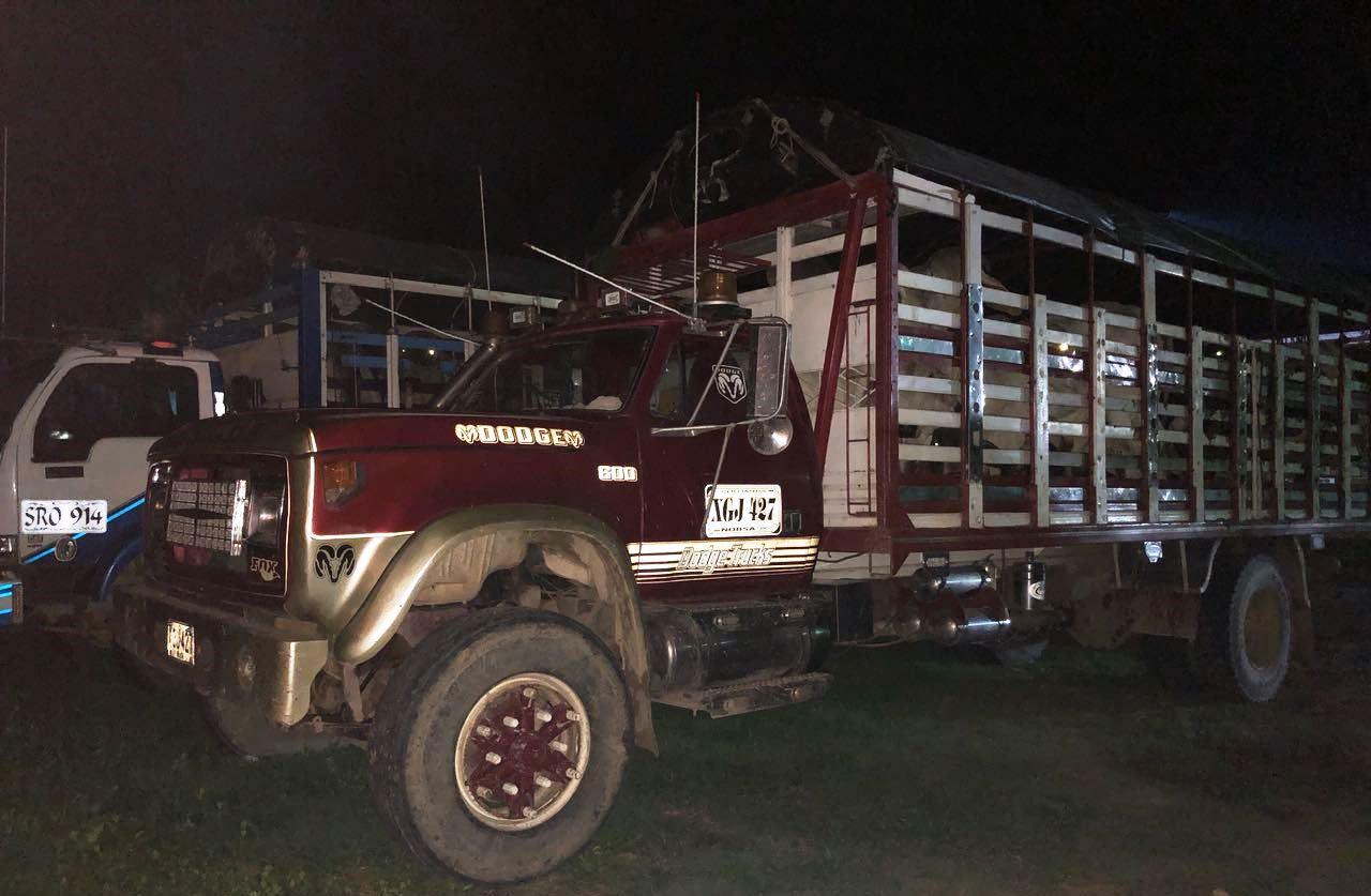 Ejército y policía, frustran millonario hurto de ganado, los semovientes iban a ser movilizados en dos camiones.