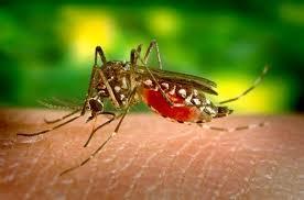Decretan alerta epidemiológica por dengue grave en Casanare
