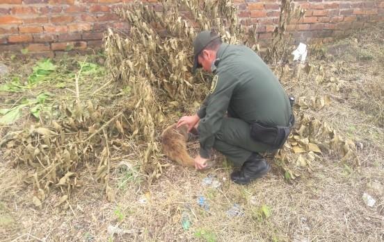 Policía rescata Oso Hormiguero herido