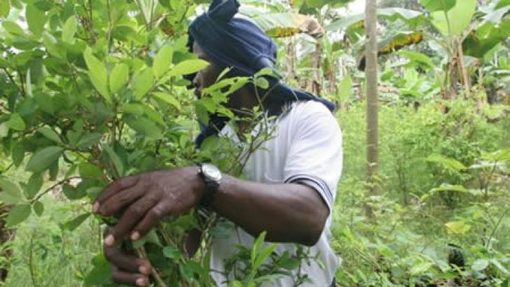 Coca, coca y más coca en la Orinoquia