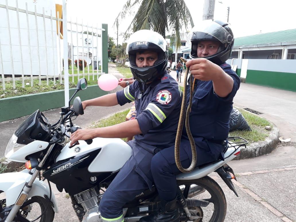 En Orocué bomberos atrapan serpiente que colocaba en riesgo vecinos del sector