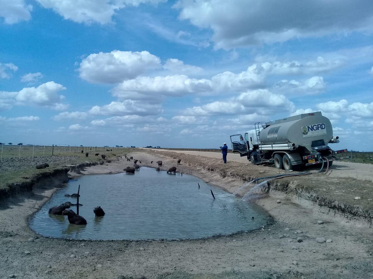Los chigüiros en Paz de Ariporo por ahora tienen agua