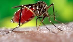 El dengue aumenta en Yopal en un 400%