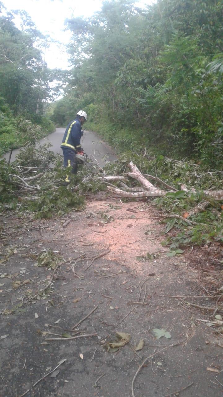 Despejan vía Nunchía La Yopalosa de árboles caídos